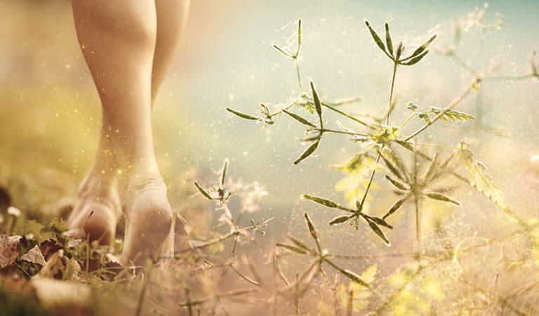 Pflanzenessenzen für Körper, Geist und Seele ... die leisen Töne der Natur